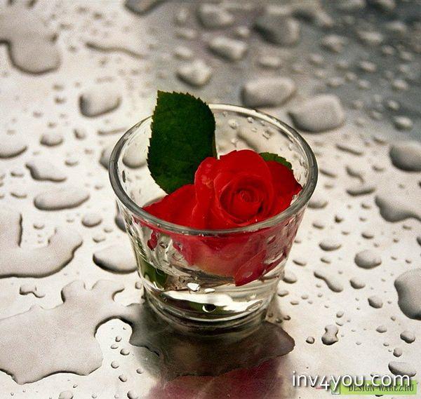 Самые необычные признания в любви - момент на всю жизнь!